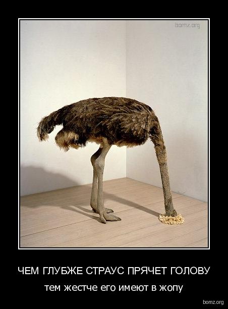 страус демотиватор