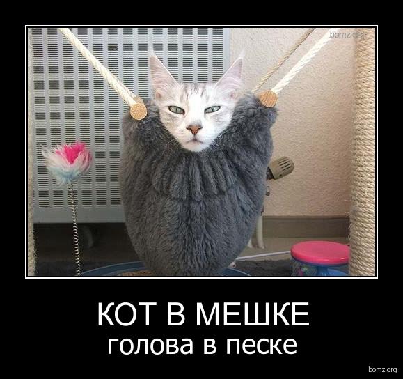 кот в мешке знакомства