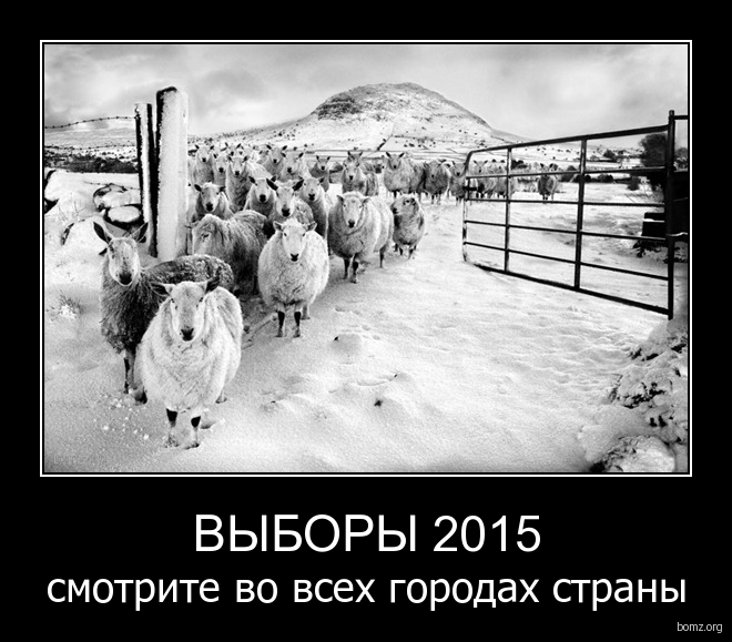 выборы 2015 : выборы 2015