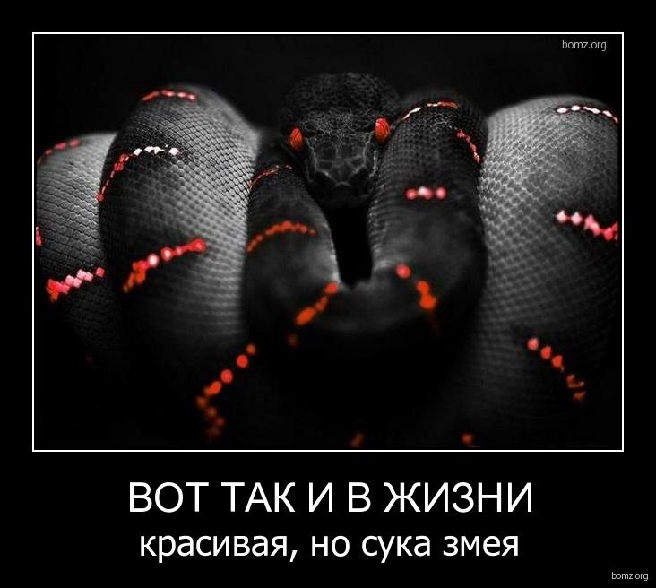 чёрные змеи фото