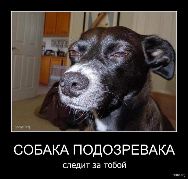 http://bomz.org/i/demotivators/327244-2010.09.28-07.22.19-bomz.org-demotivator_sobaka_podozrevaka_sledit_za_toboyi.jpg