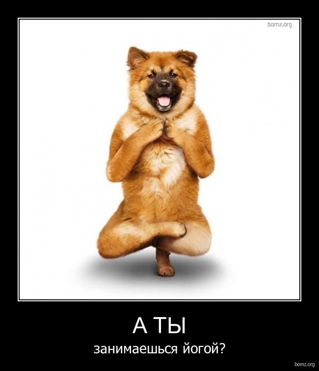 Йога демотиваторы