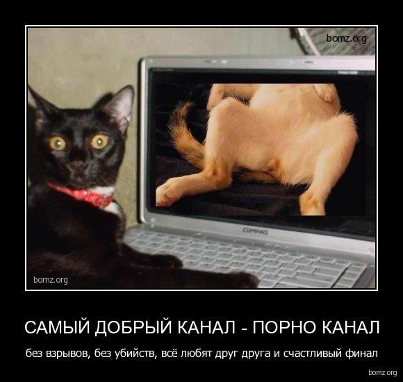 Смотеть онлайн порно 16 фотография