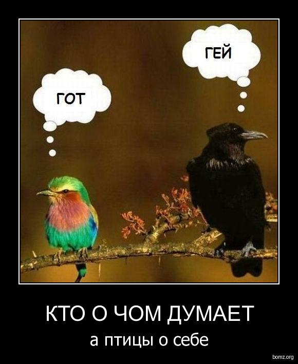 http://bomz.org/i/demotivators/490945-2010.01.08-12.10.59-1246006425_265317.jpg