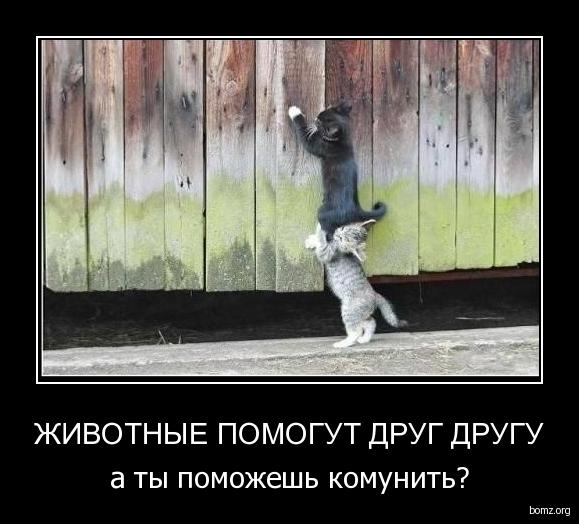животные помогут друг другу : животные помогут друг другу
