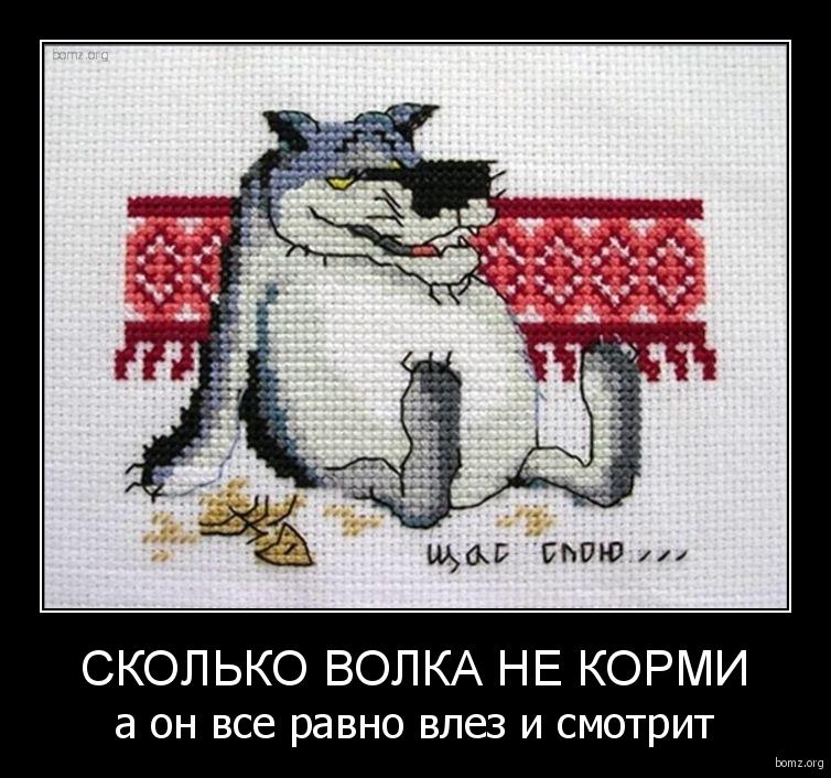 Сколько волка не корми : Сколько волка не корми