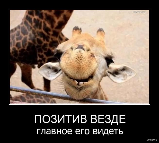 http://bomz.org/i/demotivators/731145-2011.02.05-07.43.35-bomz.org-demotivator_pozitiv_vezde_glavnoe_ego_videt.jpg