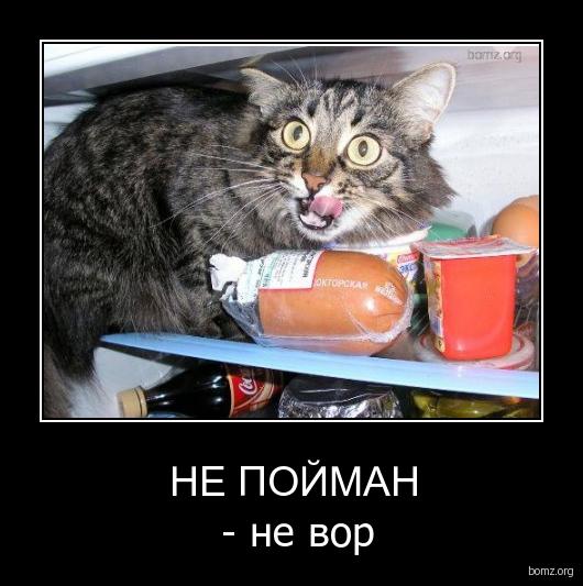 Кричащая Тимошенко, е-декларации, совещание Звягильского и Балоги, - рабочий день в Раде - Цензор.НЕТ 3152