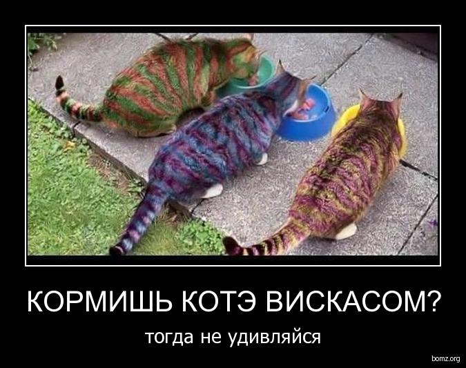 кормишь котэ вискасом? : кормишь котэ вискасом?