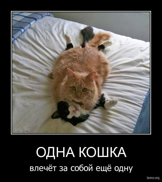 Одна кошка : Одна кошка