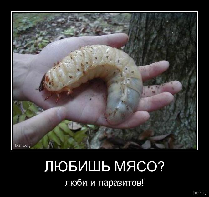 картинки паразитов живущих в человеке