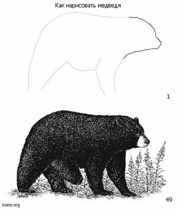 назад, как нарисовать медведя