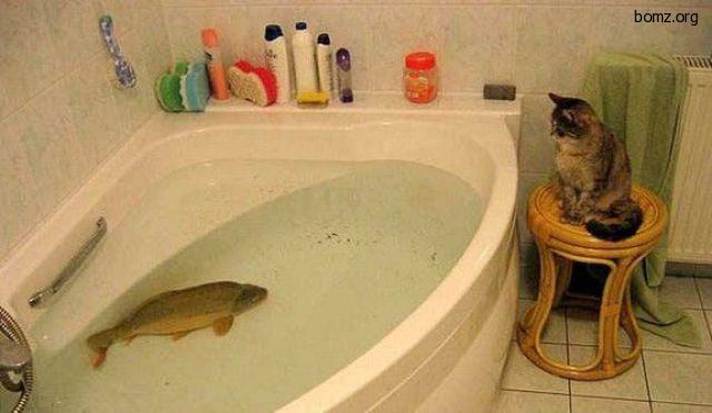 рыба в ванной