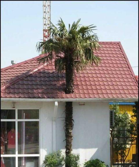 Пальма сохранена