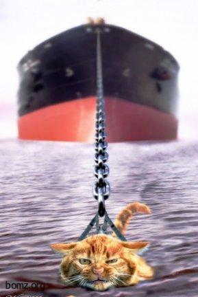 Котэ и корабль