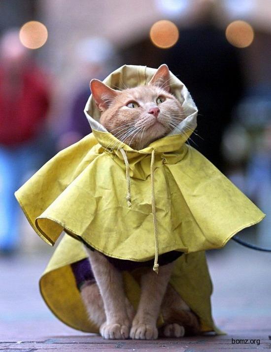 Кот в плаще