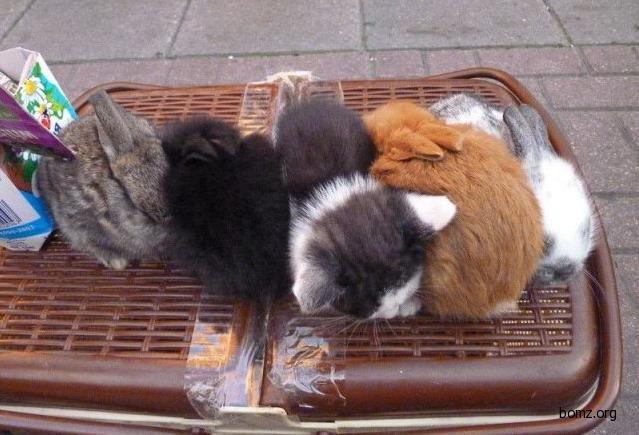 Котики и кролики