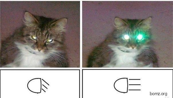 Кот дальний и ближний свет