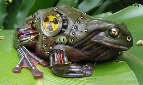 ядовитая жаба | фото приколы, смешные и прикольные картинки