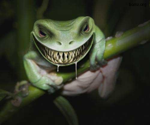 страшный жаб | фото приколы, смешные и прикольные картинки
