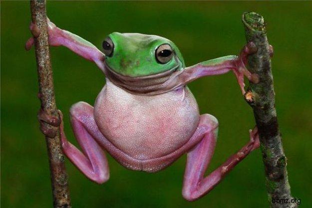 Лягушка гимнаст