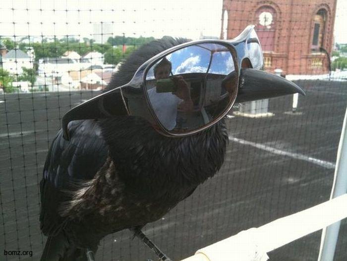 картинки прикольные ворона