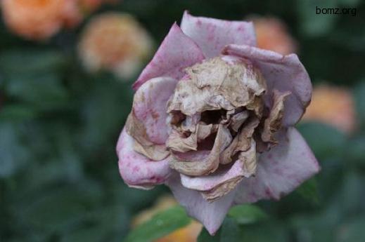 смешные картинки цветы: