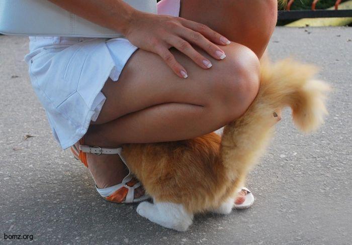 Котик пригрелся