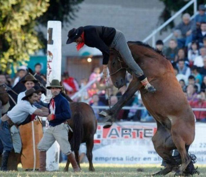 ковбой на голове коня