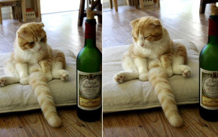 кот с вином