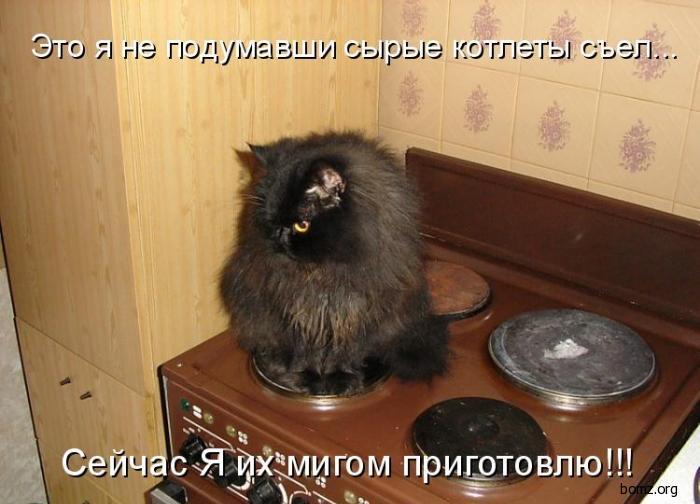 коты и кошки фото смешные