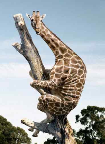 назад · жираф · вперёд...
