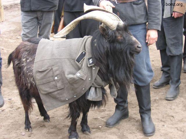 козёл в одежде