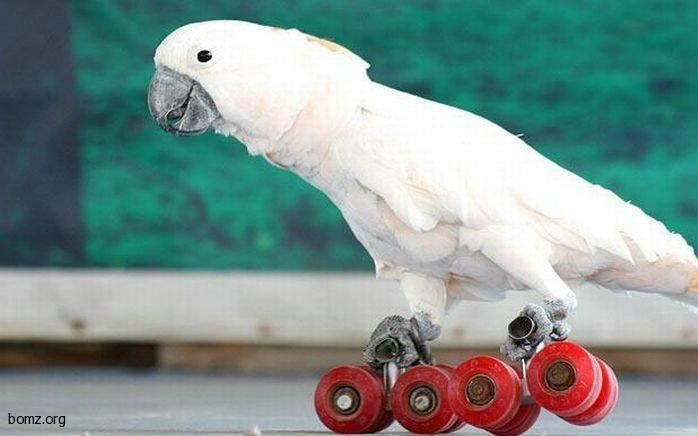 приколы с попугаями: