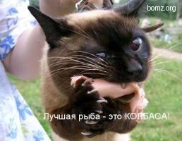 Кот ест сасиську