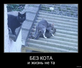 Без кота : Без кота