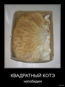Квадратный котЭ : Квадратный котЭ